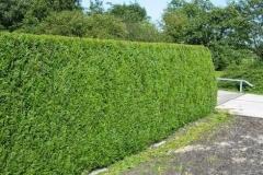 Nice-hedge